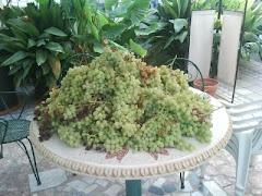 Las uvas de mi parra