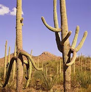 Saguaro National Monument
