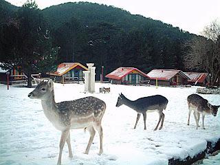 Parco di llogora Albania