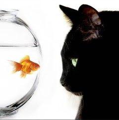 Prede di elyos avatars e sfondi per myspace pesci rossi for Vasche esterne per pesci rossi