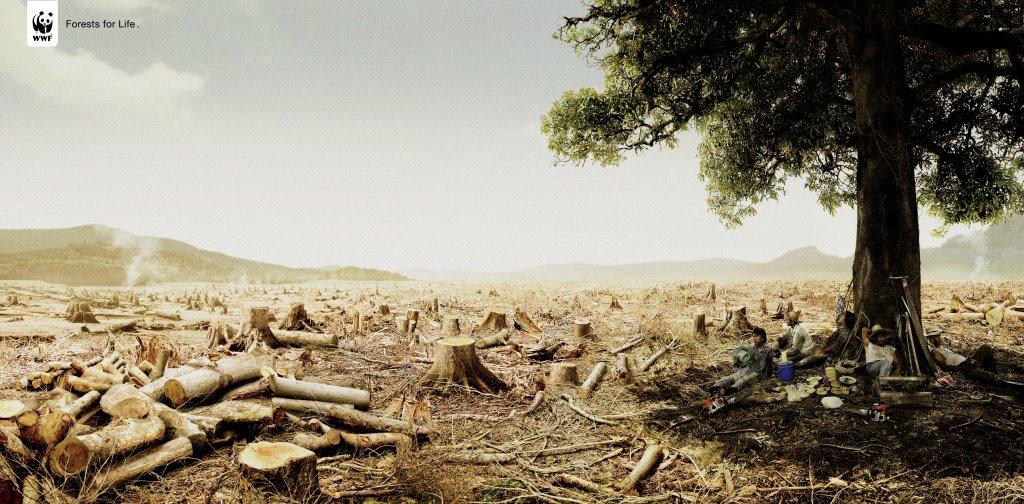 Wwf world wide fund for nature - F und s polstermobel ...