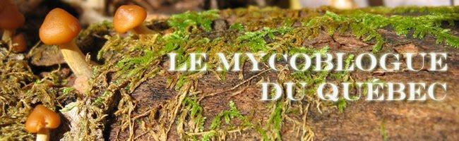 Le Mycoblogue du Québec