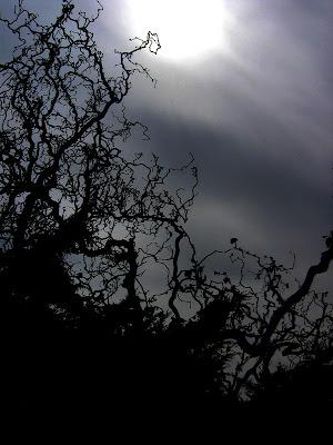 Le noisetier, un arbre à la tim burton