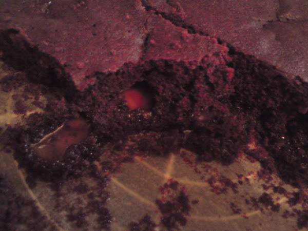 1. Versuch Brownies mit Karamell (Caramel Brownies) - natürlich glutenfrei!