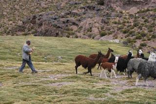 Pueblos originarios de chile aymara for Terrazas economicas chile