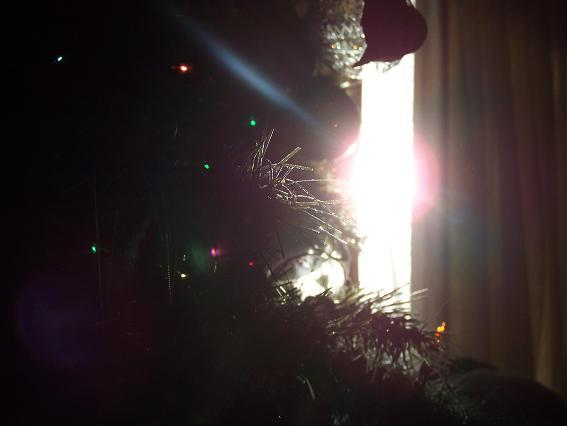 [tree1.JPG]