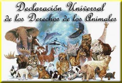 Día Mundial de los Derechos de los Animales