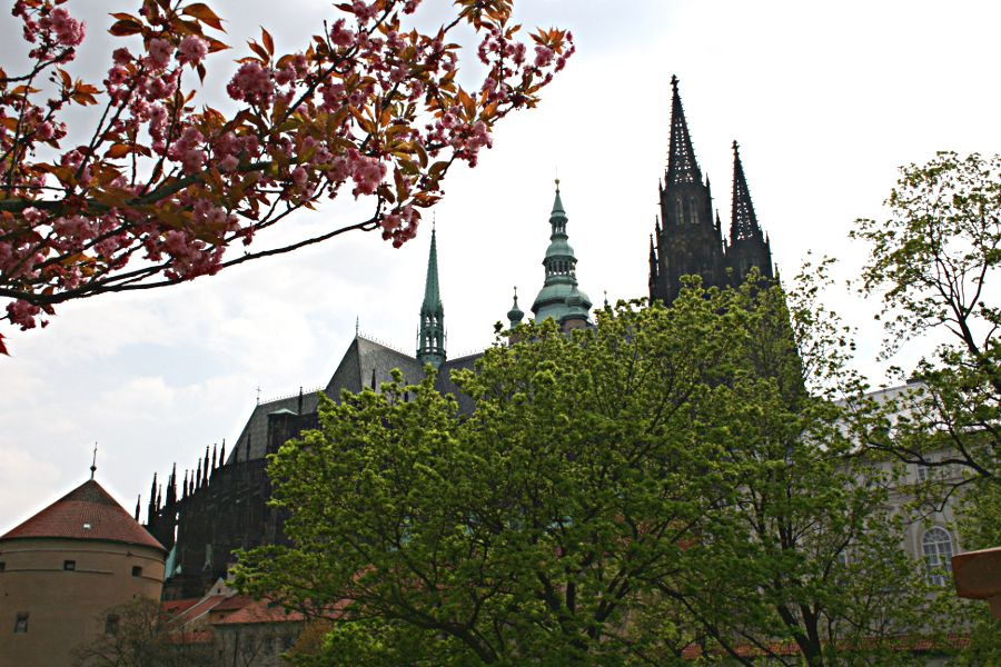 Black and green spires on St Vitus Cathedral with pink blossom in foreground
