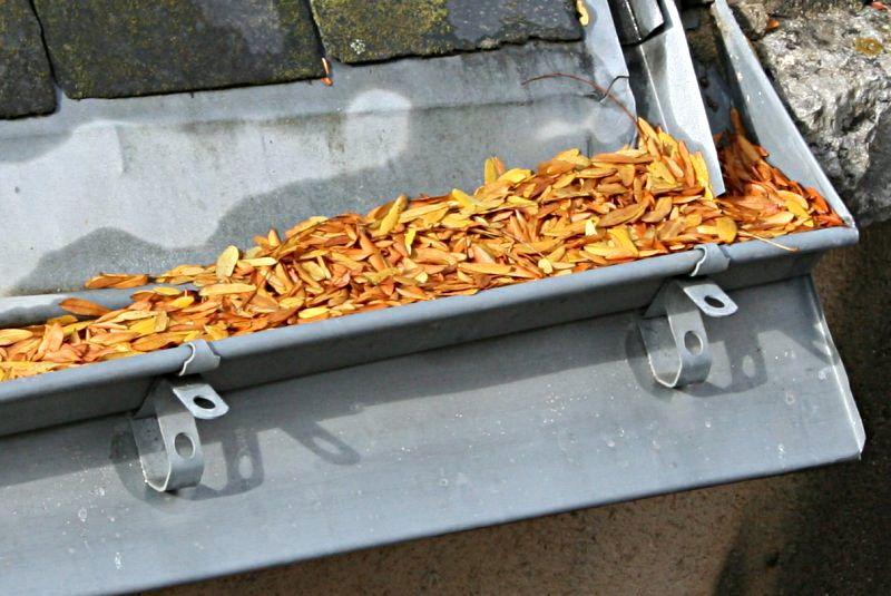 small yellow orange leaves filling gutter