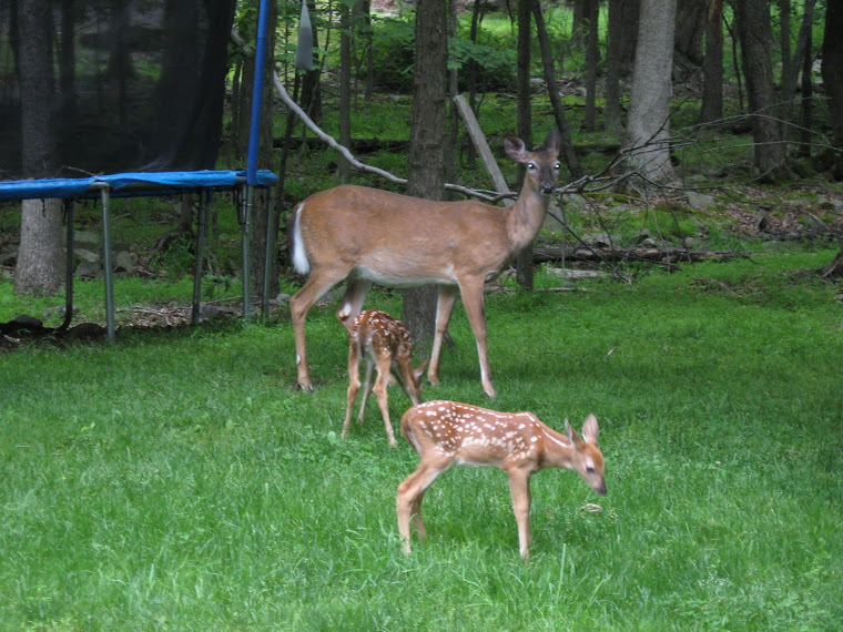 Animals Who Visit My Backyard in the Poconos