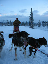 Mushing in Denali
