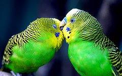поцелуй, вопросы психологии, психологическая помощь, советы психолога