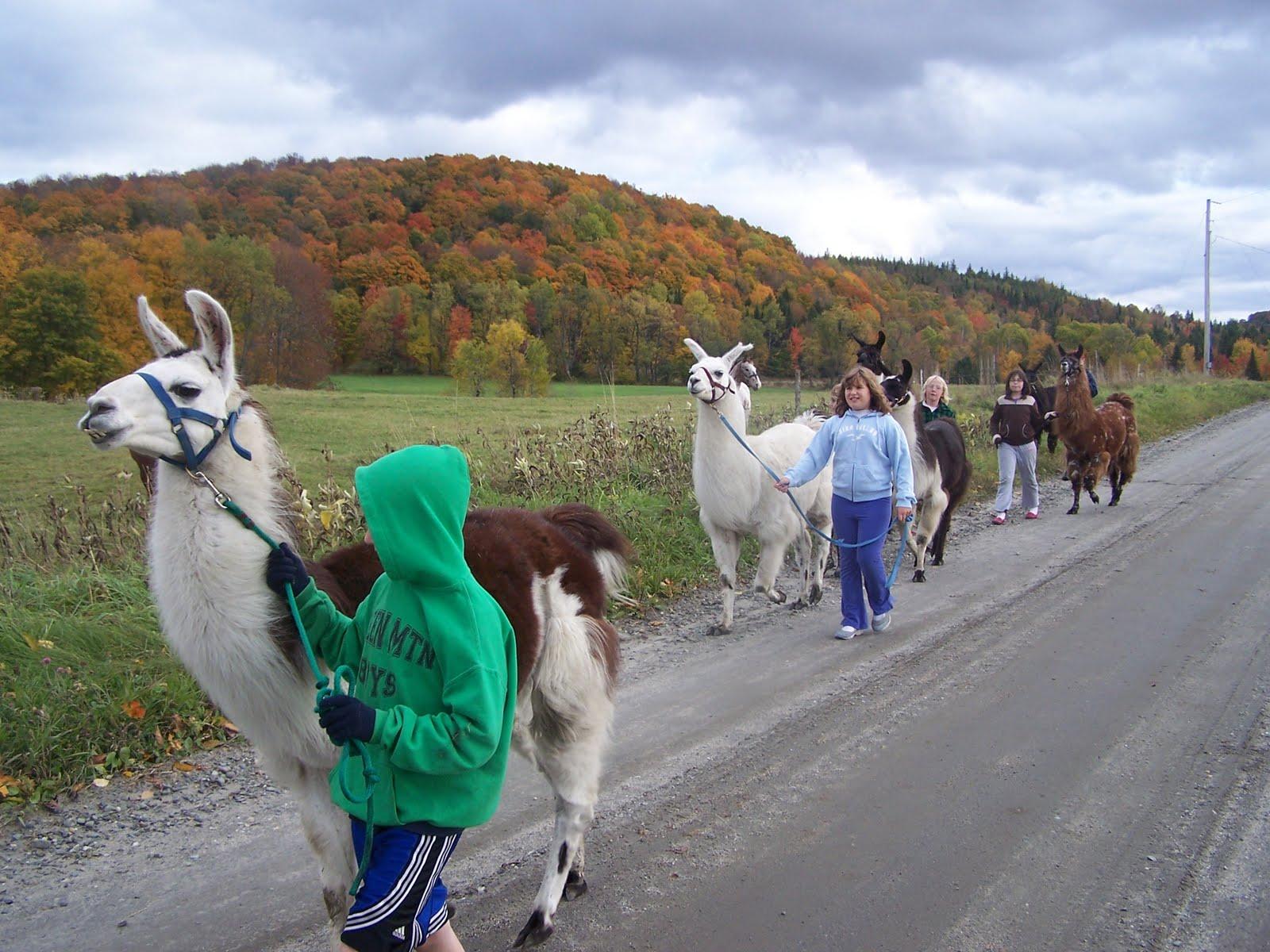 how to start a llama farm