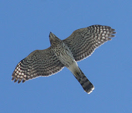 One of these beautiful birds visits my home