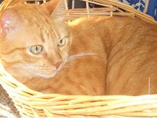 O gato Bolinha à sua janela...