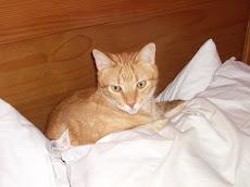 O Gaspar na sua almofada...(não gosta muito de janela)