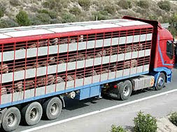 Transporte de animales para consumo humano.