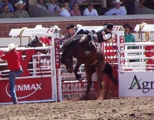 Doma de caballo, en Texas.