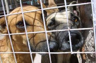 Perros abandonados por sus dueños han acabado recogidos por un refugio y esperan adopción o acogida.