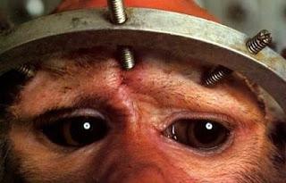 Mono inmovilizado para estudios de neurología.