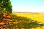 Fazenda em Bauru