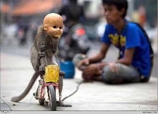 Kumpulan Foto Lucu Topeng Monyet Bertopeng