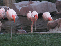 The World Famous Flamingo