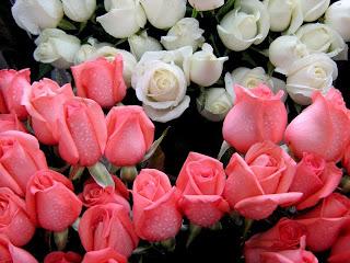 http://2.bp.blogspot.com/_VQBPIj9SNrw/StiQWoxJ4zI/AAAAAAAAAo0/zGdP3CCLIxY/s320/FloresLindas.jpg