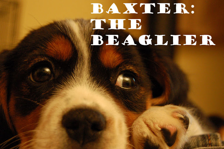 Baxter the Beaglier