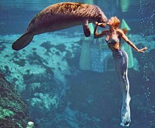 IMAGE(http://2.bp.blogspot.com/_VToVep-jpik/Sa1VVmZMSgI/AAAAAAAACIE/KoJO2L8Yyfw/s320/mermaid-and-manatee.jpg)