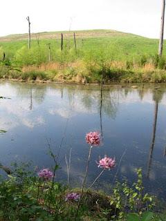 Ellerbe Creek Notes Native Flowers Near The Landfill