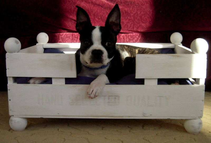 Dog Cat Grooming In Stuart Va