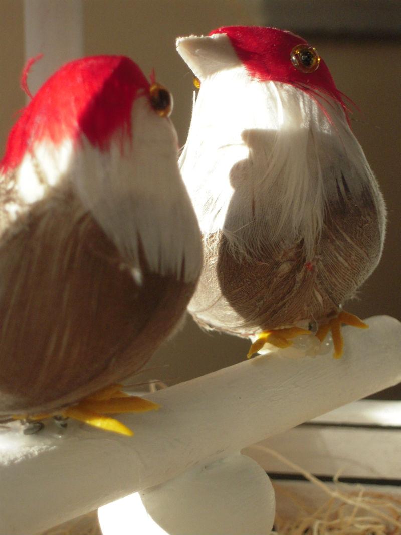 Фото птиц своими руками 1024