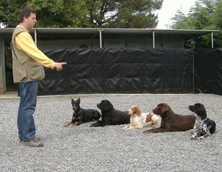 Un adiestrador adiestrando a 5 perros