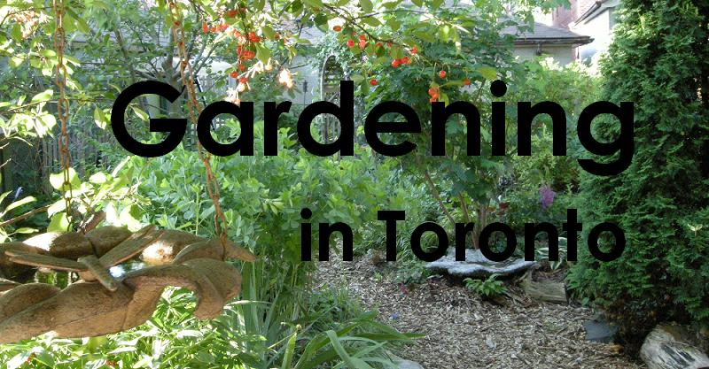 Gardening in Toronto