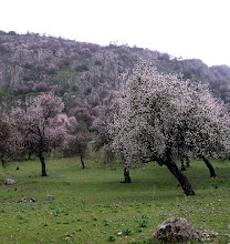 Almendros