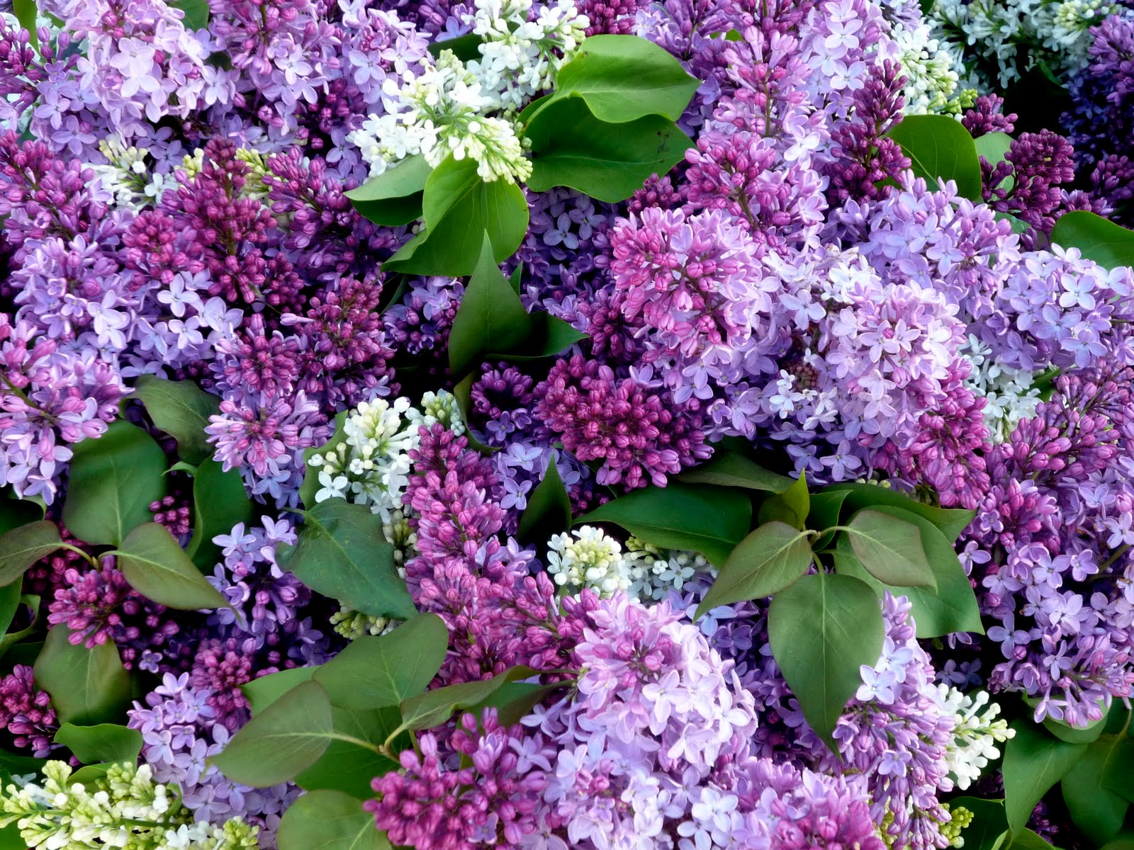 Queenie takes manhattan green and purple things in the for Flowers union square nyc