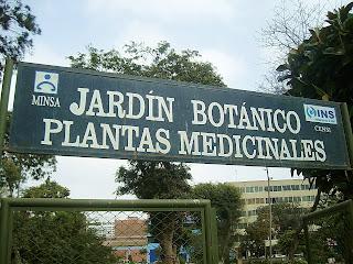 Zumo de lima jardin botanico de plantas medicinales for Jardin botanico medicinal