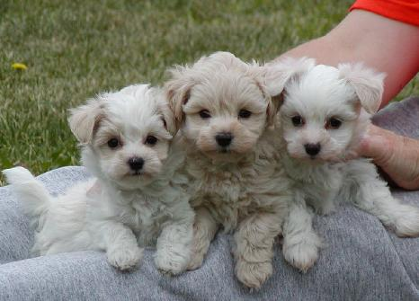 images of puppies and dogs. After buy the new dog arrived,