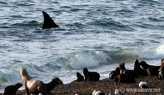 Foto de Punta Norte - Orcas Season from February to april