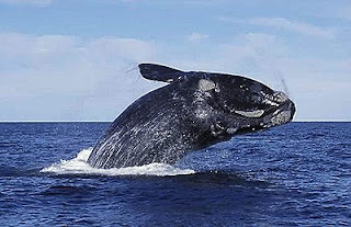 Whale Watching - Whale Behaviour Climate