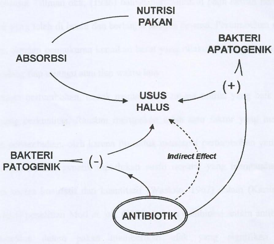 Abdul Alim Yamin: Penggunaan Antibiotik Dalam Ransum Broiler