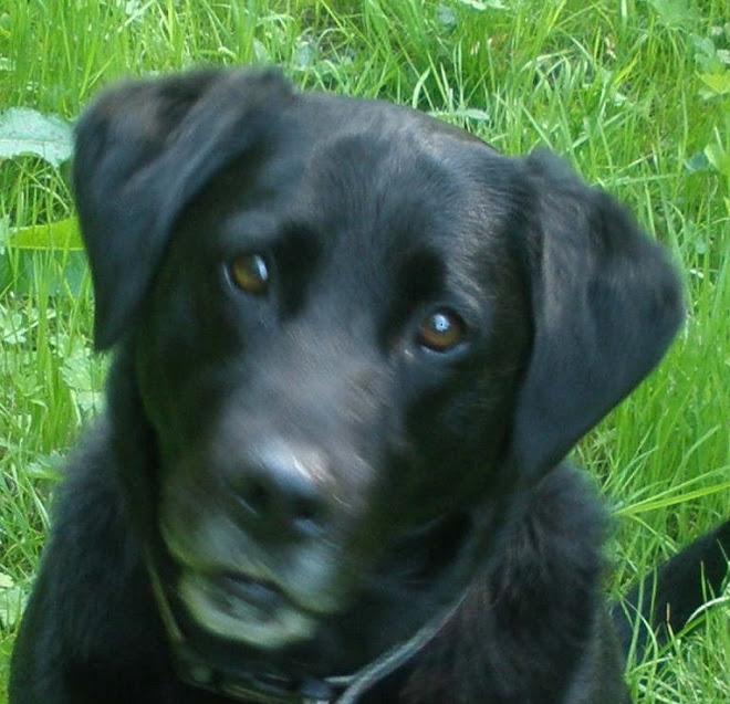 Onze hond Lara