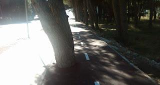 arboles bloqueando los dos carriles bici