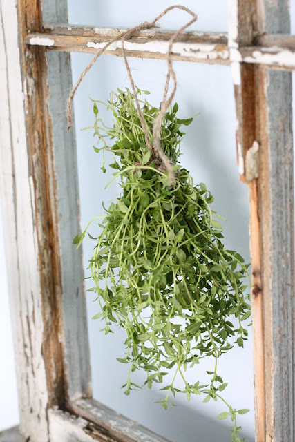 Thyme garden party decor