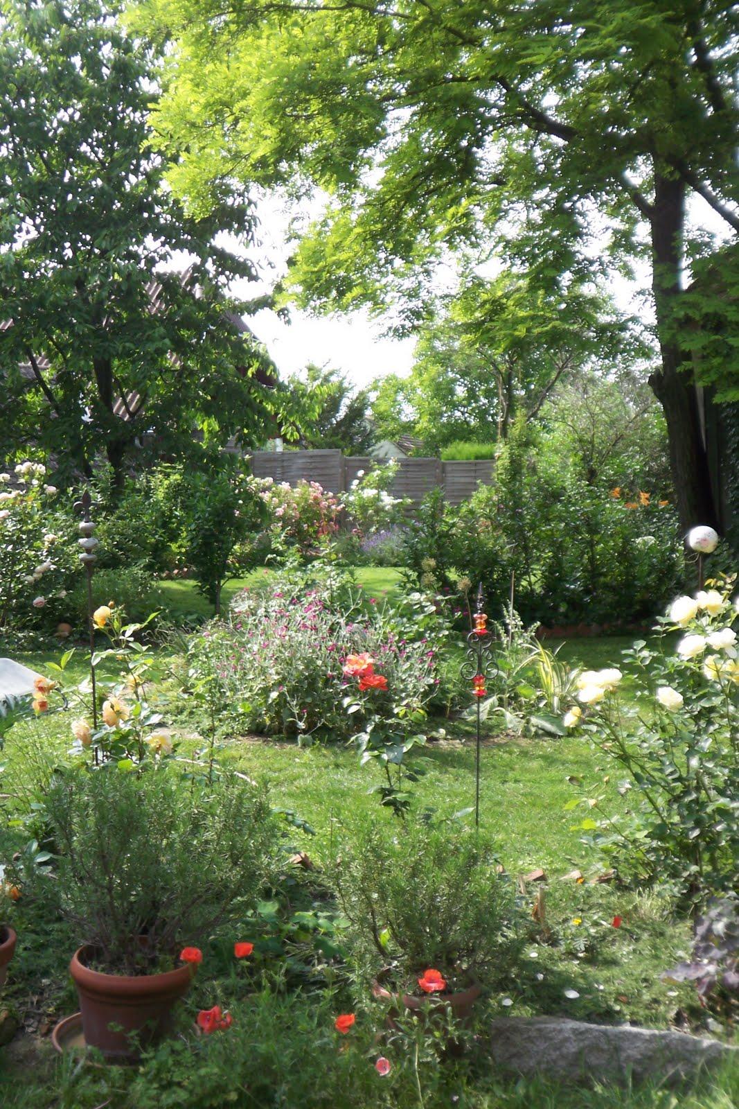 Rose und Lavendel Juni 2010