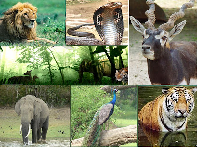 wildlife protection hindi Essay on wildlife conservation like forests, wildlife is also a national in india, the government and ngos are taking keen interest in the protection of wildlife.