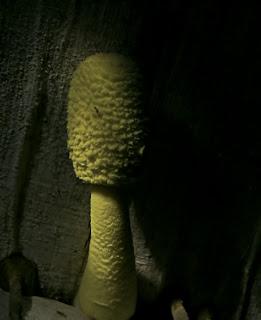 El hongo de los pie la crema el ungüento