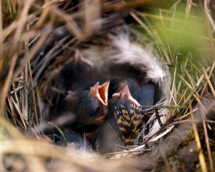 [tree_sparrow_nest.jpe]