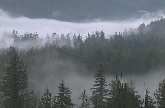 [Misty+Walbran+Valley]